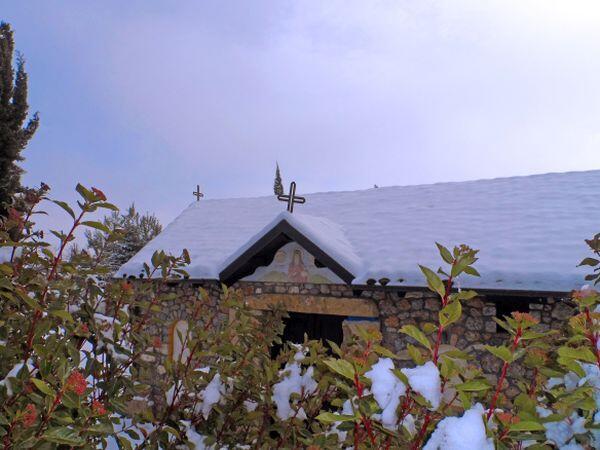 Ανθισμένα λουλούδια στην χιονισμένη Παναγιά του Ολύμπου!