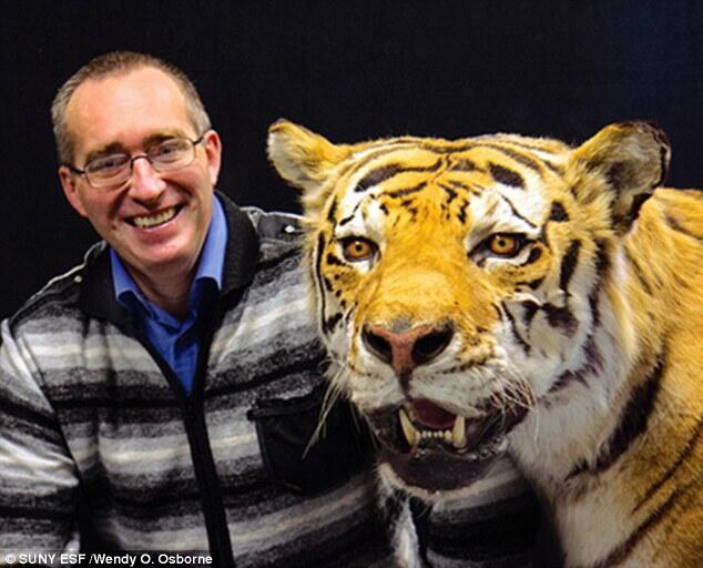 Μιχαήλ Παλστίν τίγρης