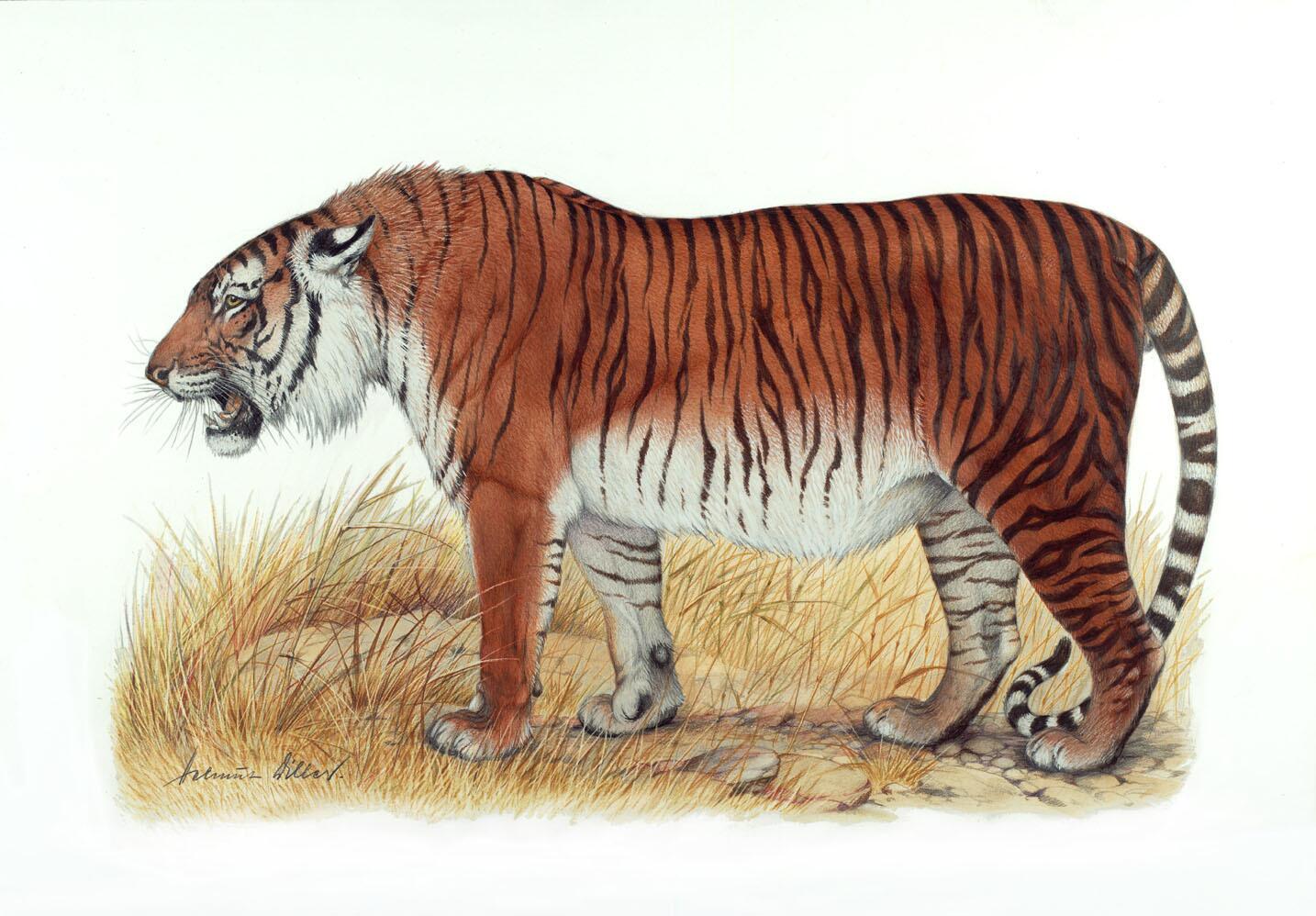 Ο τίγρης της Κασπίας