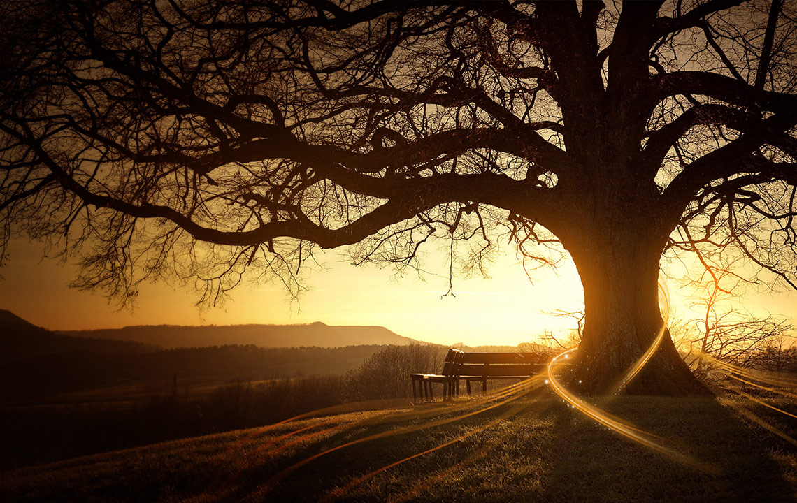 συνειδηση δέντρο