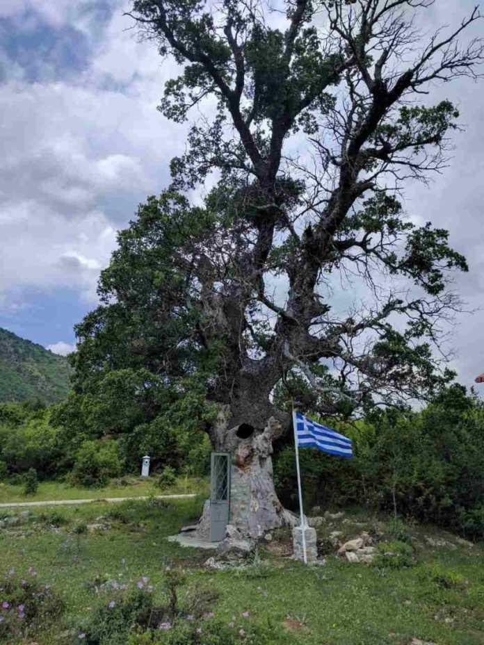 Άγιος Παΐσιος: Χιλιάδες πιστοί επισκέπτονται το εκκλησάκι που χτίστηκε σε δέντρο