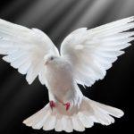 αγιο πνευμα