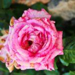 εορτολόγιο γιορτή λουλούδι