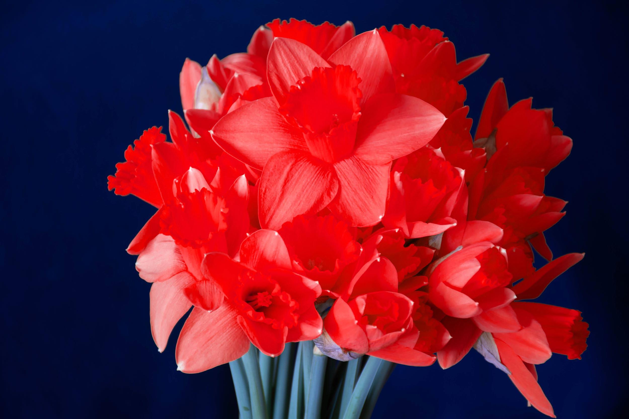 εορτολόγιο γιορτή σήμερα λουλούδι