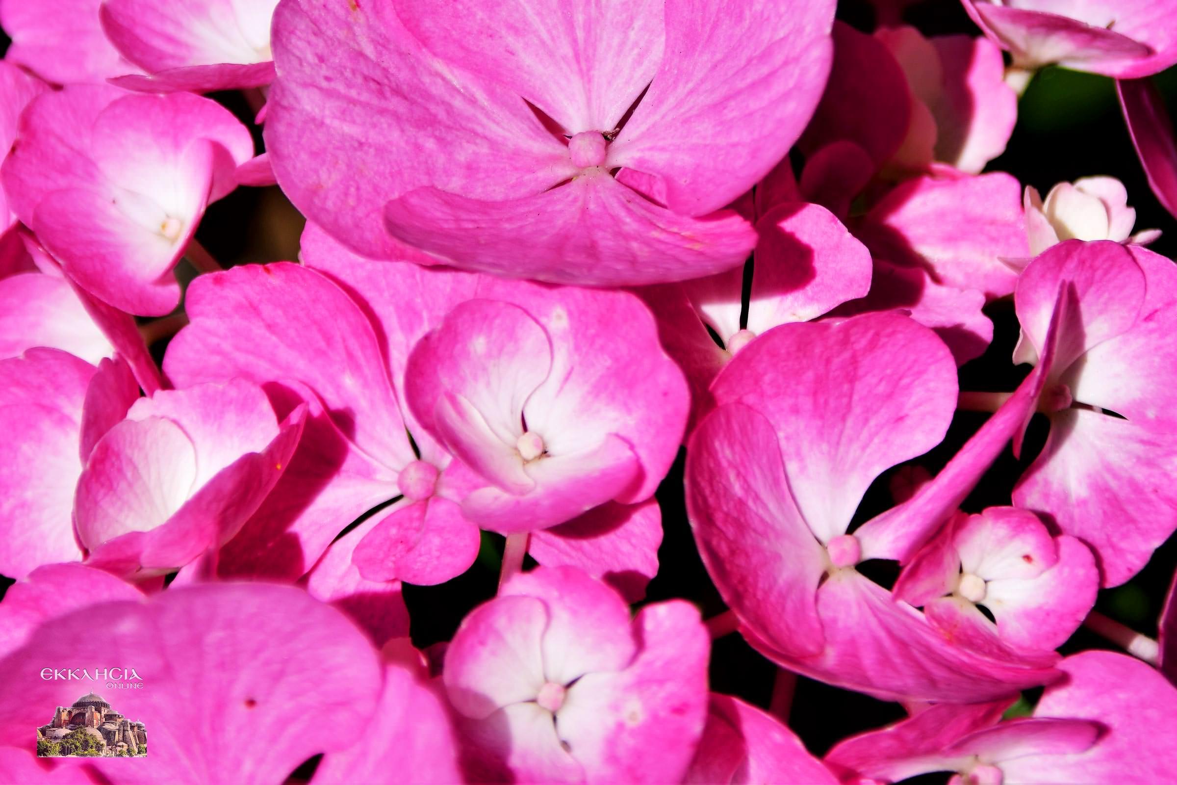Γιορτή σήμερα λουλούδια ποιοι γιορτάζουν σήμερα εορτολόγιο