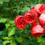 ποιοι γιορταζουν σημερα εορτολογιο λουλουδια