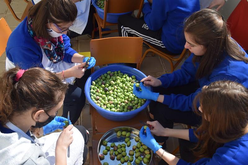 Μαθητές μάζεψαν και ετοίμασαν ελιές Αργυροκάστρου