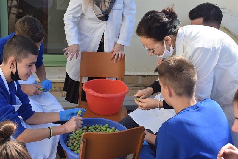 Μαθητές μάζεψαν και ετοίμασαν ελιές