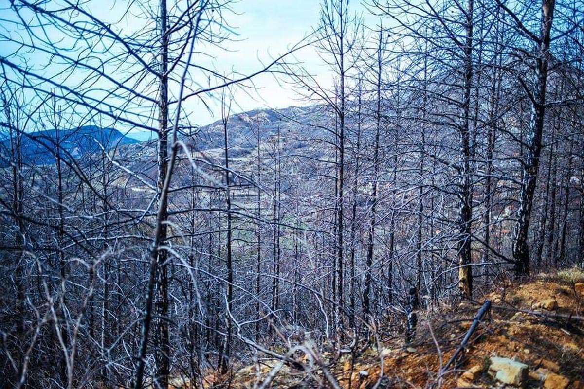Καμένο δάσος Ελμπασάν