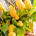 Γιορτή σήμερα κίτρινα λουλούδια