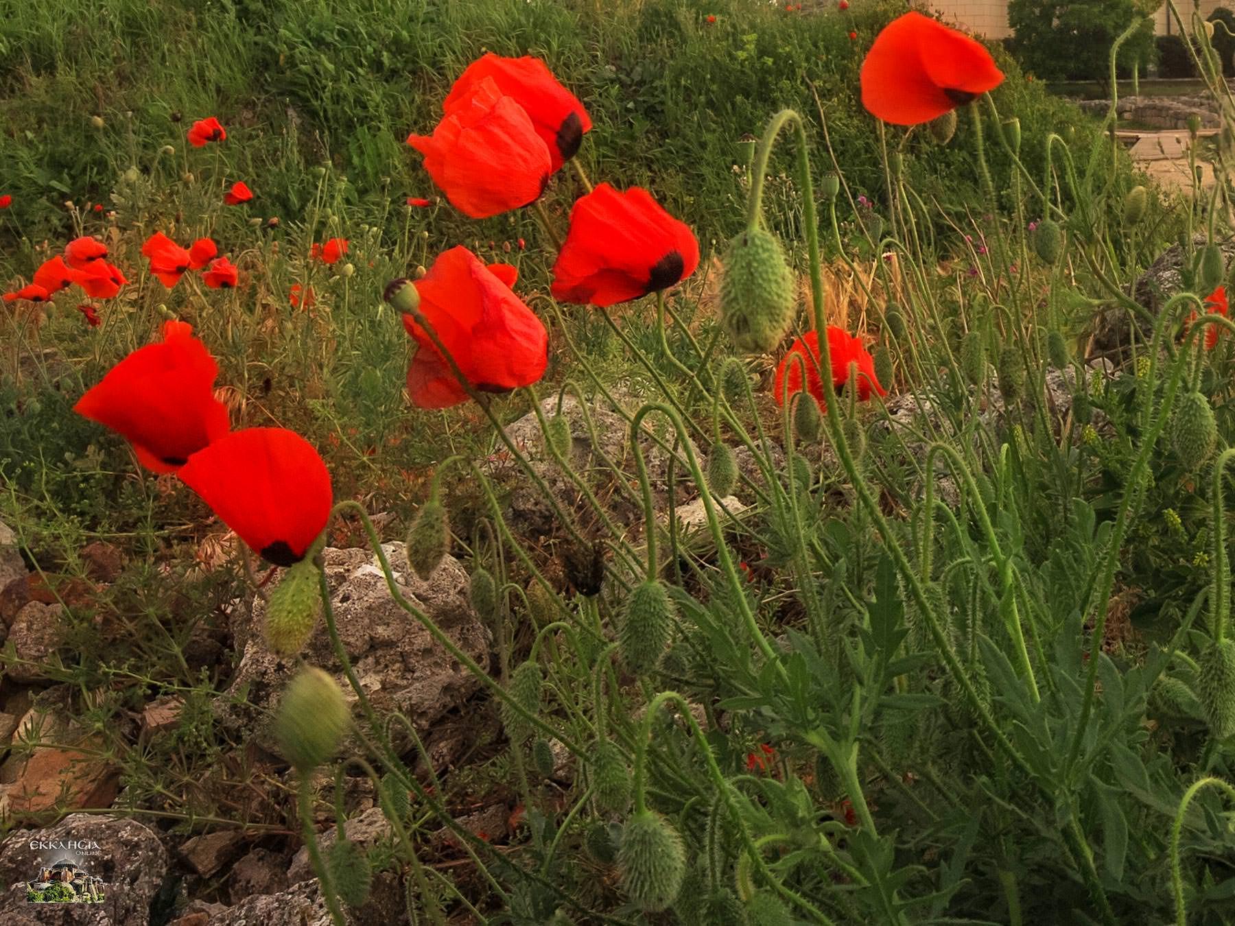 Γιορτή σήμερα λουλούδια