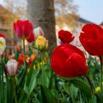 Γιορτή σήμερα Εορτολόγιο λουλούδια