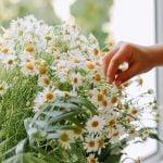 εορτολόγιο λουλούδια