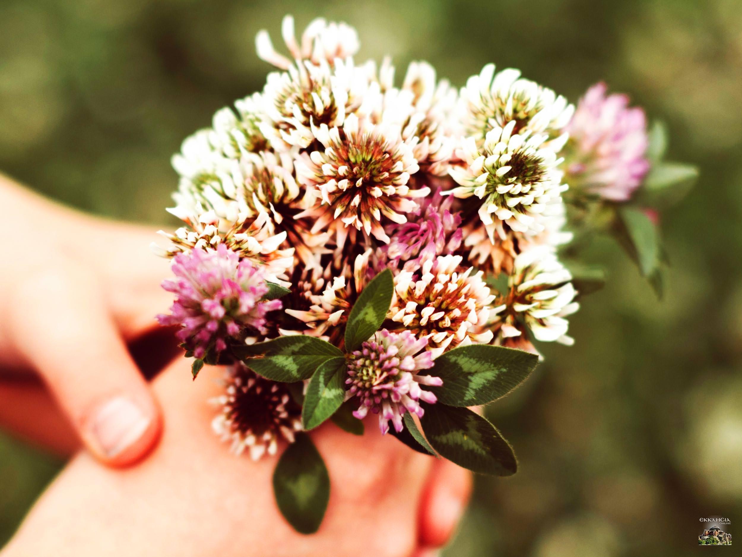 Λουλούδια Γιορτή